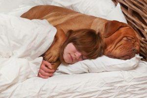 Животные в постели