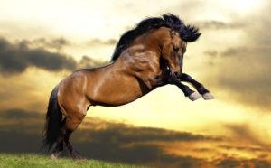 Как выглядит конь