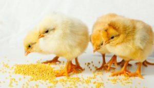Кормить, поить, ловить птенцов во сне