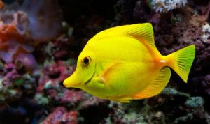 К чему снится живая рыба, значение сна с фото