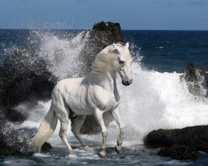 К чему снится конь, значение сна с фото