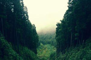 К чему снится лес, значение сна с фото
