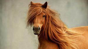 К чему снится лошадь женщине, значение сна с фото