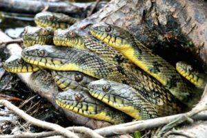 К чему снится много змей, значение сна с фото