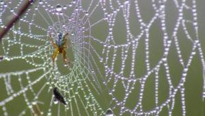 К чему снится паутина, значение сна с фото