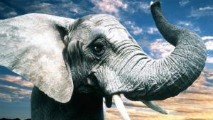 К чему снится слон, значение сна с фото