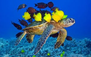 К чему снится черепаха, значение сна с фото