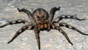 К чему снятся большие пауки, значение сна с фото
