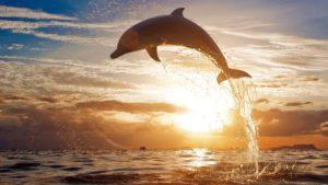 К чему снятся дельфины, значение сна с фото
