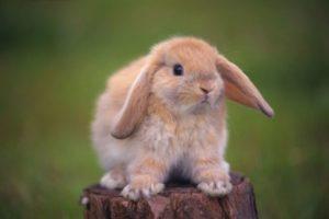 К чему снятся кролики, значение сна с фото