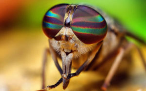К чему снятся мухи, значение сна с фото