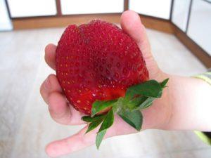 Приснилась большая красная ягода