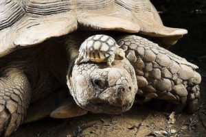 Приснилась черепаха