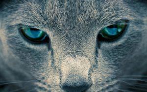 Приснились кошачьи глаза