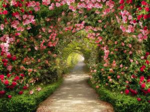 Приснились цветы в саду, в вазе или горшке
