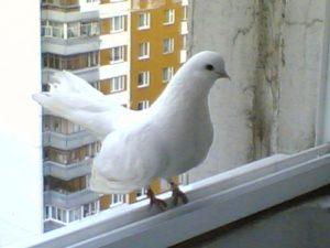 Птица впорхнула в окно