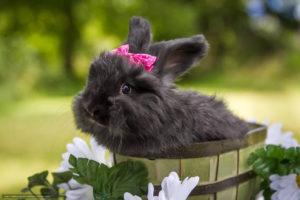 Увидеть во сне белого, серого, рыжего, черного кролика