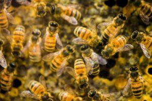 Увидеть во сне рой пчел/очень много