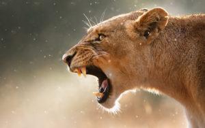6. Видоизменённый защитный инстинкт, доставшийся человеку от животных