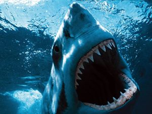 К чему снится акула, значение сна с фото