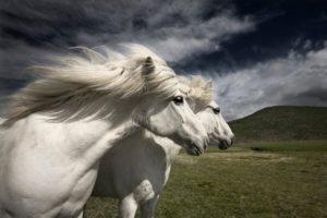 К чему снится белая лошадь, значение сна с фото
