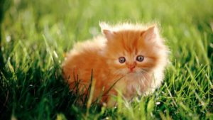 К чему снится рыжий котенок, значение сна с фото