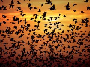 К чему снится стая птиц, значение сна с фото