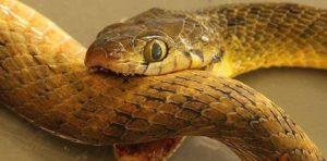 К чему снится укус змеи, значение сна с фото