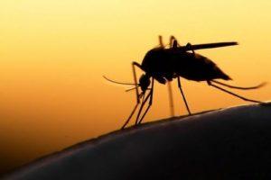 К чему снятся комары, значение сна с фото